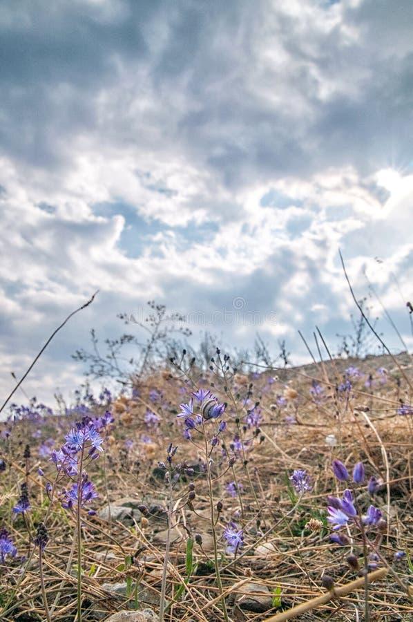 Bloemen in de bergen Rusland, de Krim royalty-vrije stock foto's