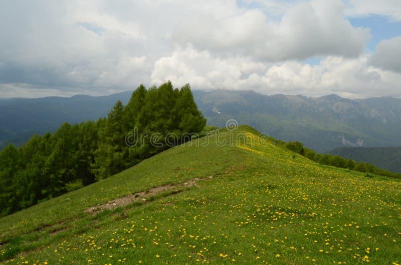 Bloemen in de bergenmening stock foto's