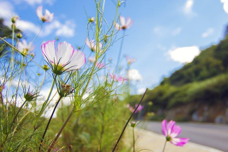 Bloemen in de blauwe hemel worden geglimlacht die royalty-vrije stock fotografie