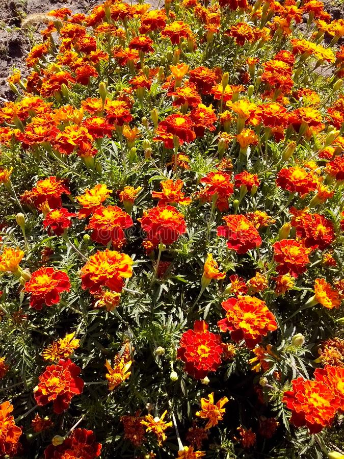 Bloemen in de botanische tuin stock afbeelding