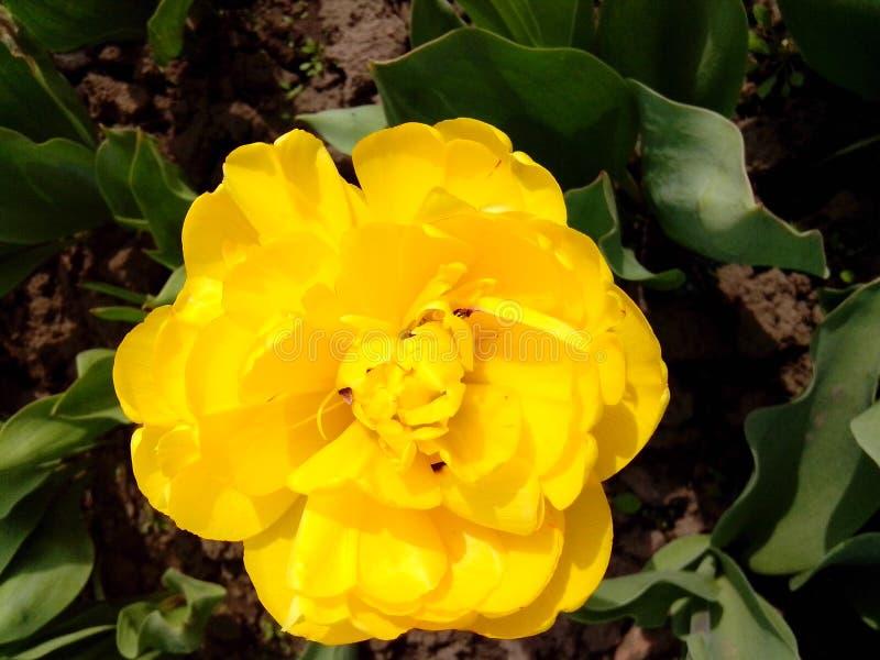 Bloemen in de botanische tuin stock foto's