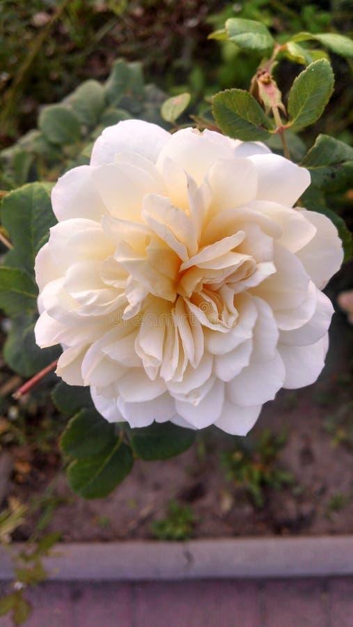 Bloemen in de botanische tuin stock foto