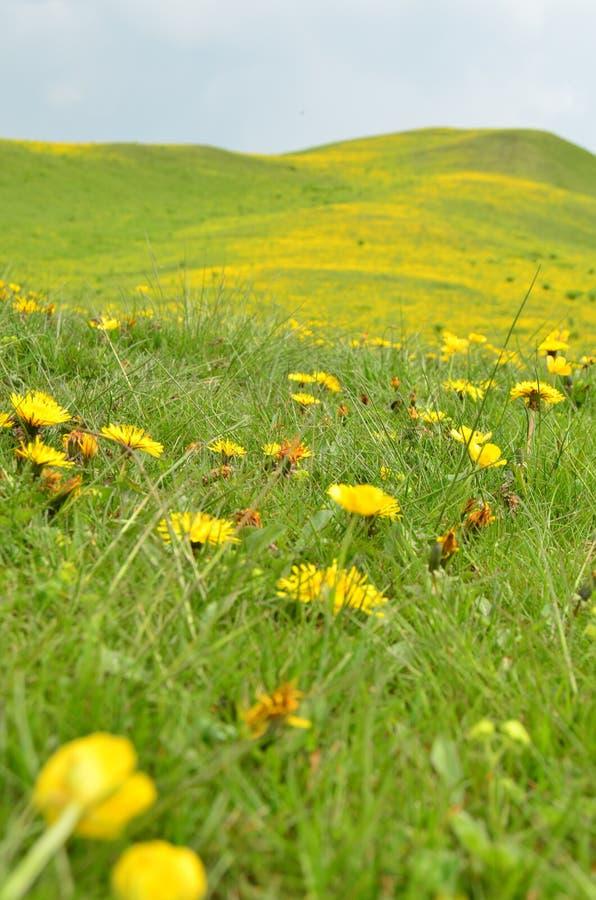 Bloemen in de lente stock foto's