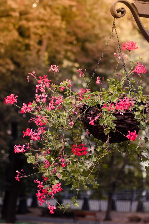 Bloemen in de lucht stock foto