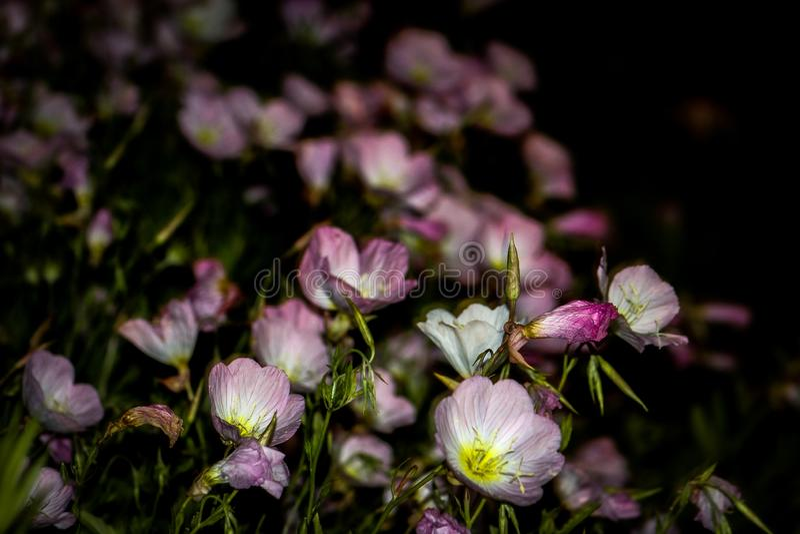 Bloemen in de nacht stock foto's