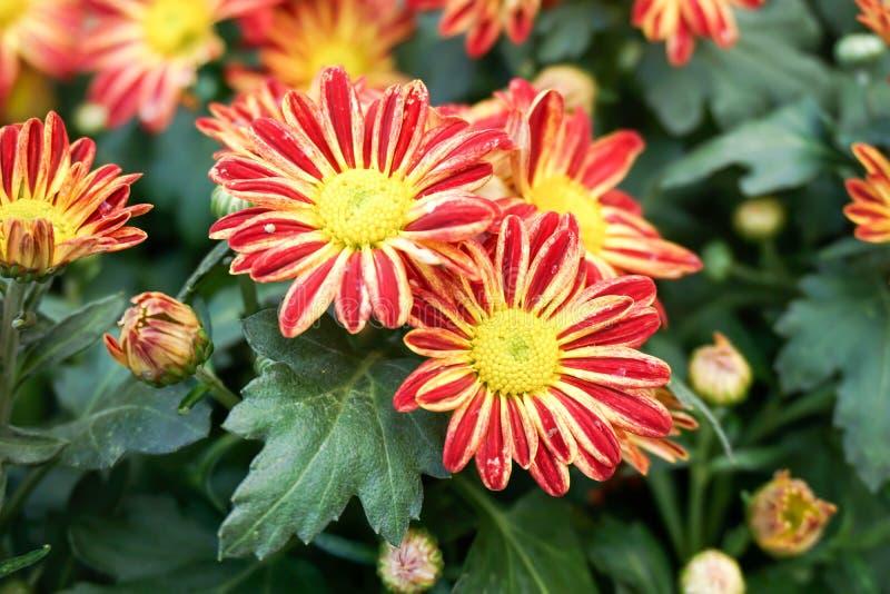 Bloemen in de ochtend royalty-vrije stock afbeeldingen
