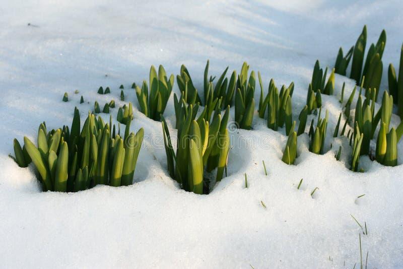 Bloemen in de sneeuw royalty-vrije stock foto