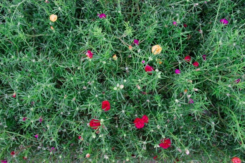 Bloemen in de struik stock foto's