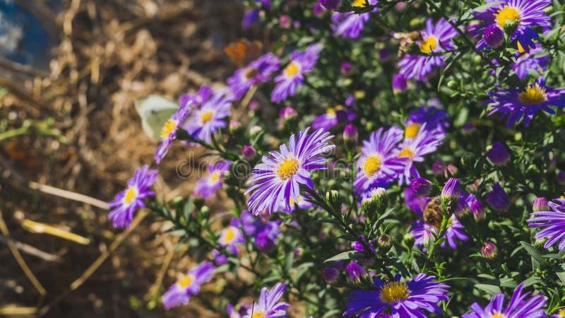 Bloemen in de tuin royalty-vrije stock afbeeldingen