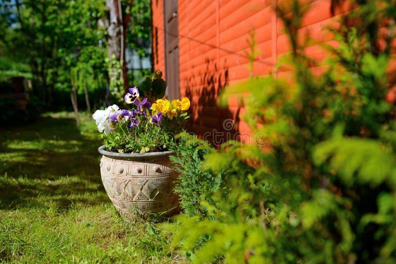 Bloemen in de tuin, pot royalty-vrije stock afbeelding