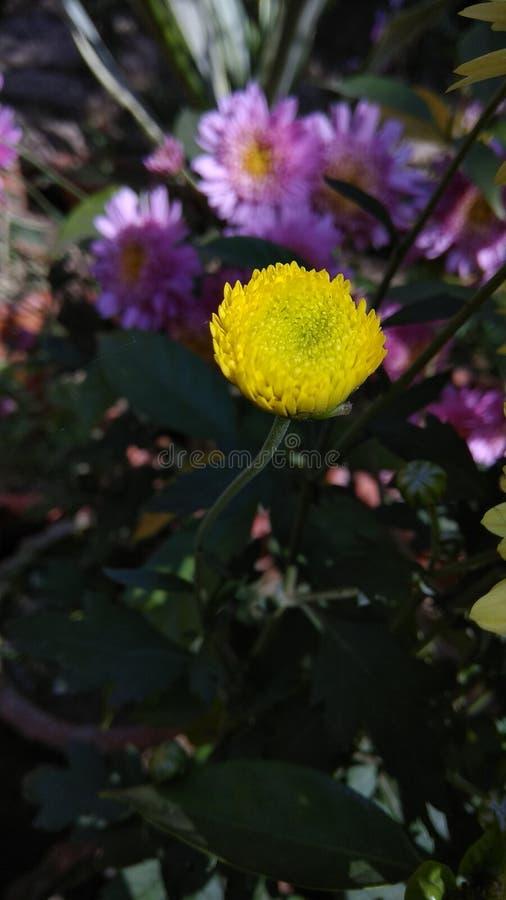 Bloemen in de Tuin van India royalty-vrije stock afbeelding