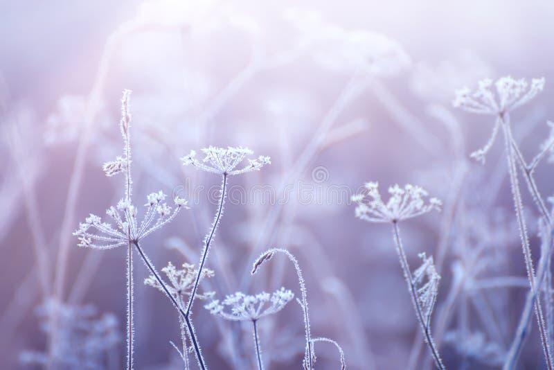 Bloemen in de vorst met een zacht ochtendlicht royalty-vrije stock foto's