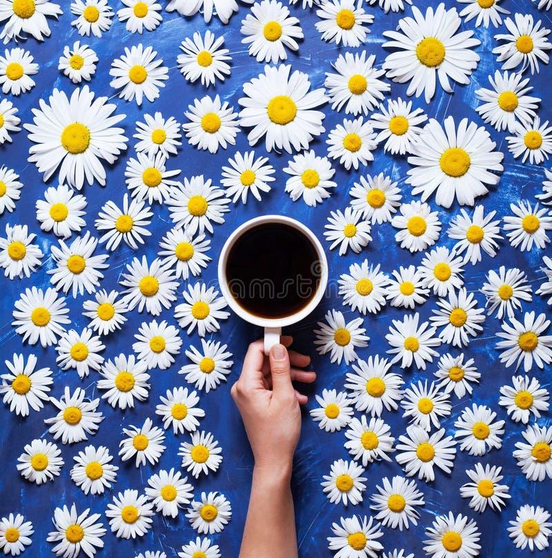 Bloemen de zomerachtergrond Een mok koffie in een vrouwen` s hand op een blauwe achtergrond met kamille of madeliefjes Hello-de z stock fotografie