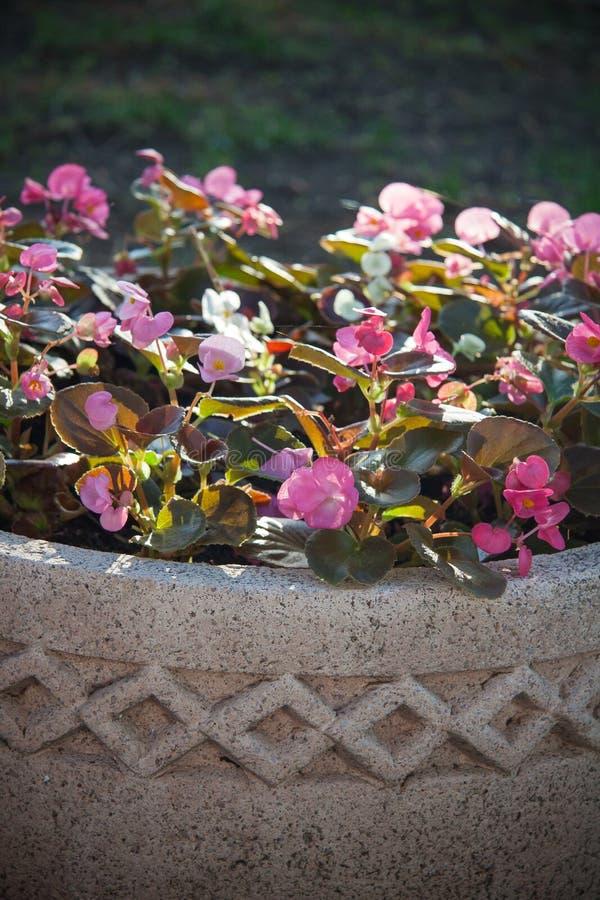 Bloemen in decoratieve kleiamfora in tuin stock fotografie