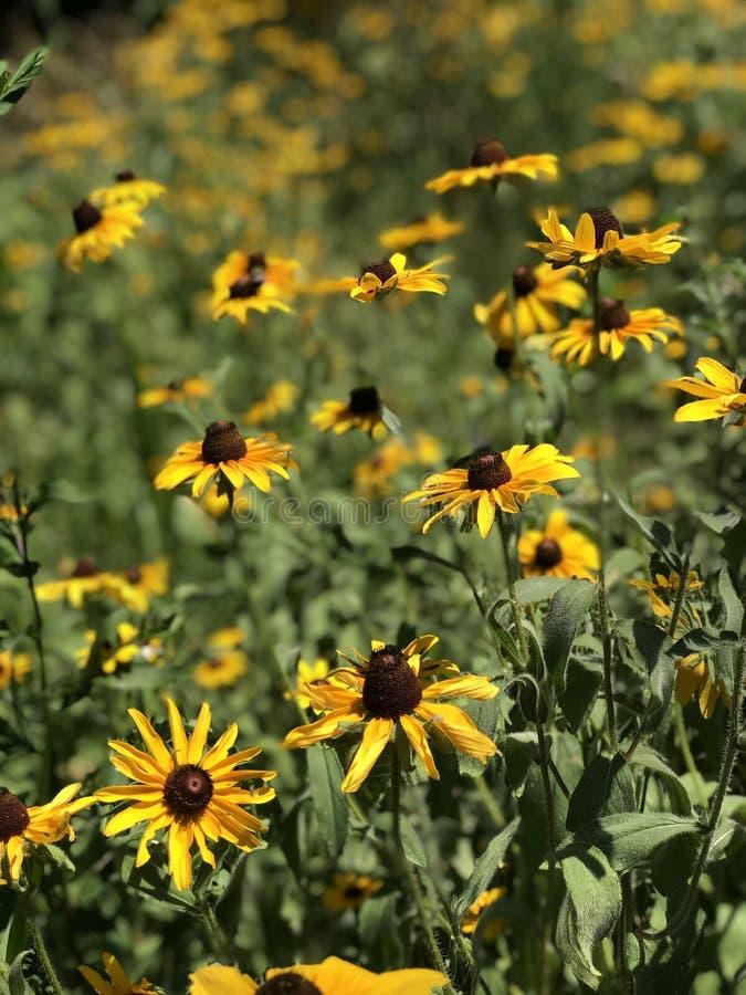Bloemen die aan de zon lijden stock foto's