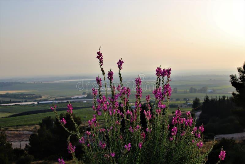 Bloemen die de vallei overzien royalty-vrije stock afbeeldingen
