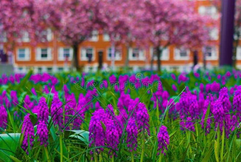 Bloemen die in de zomer bloeien stock foto's