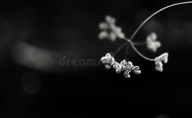 Bloemen die in een fijne kunststijl zijn ontsproten in een studio royalty-vrije stock afbeeldingen