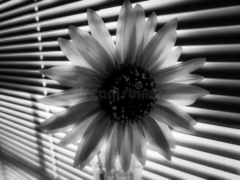 Bloemen die in een fijne kunststijl zijn ontsproten in een studio stock foto's