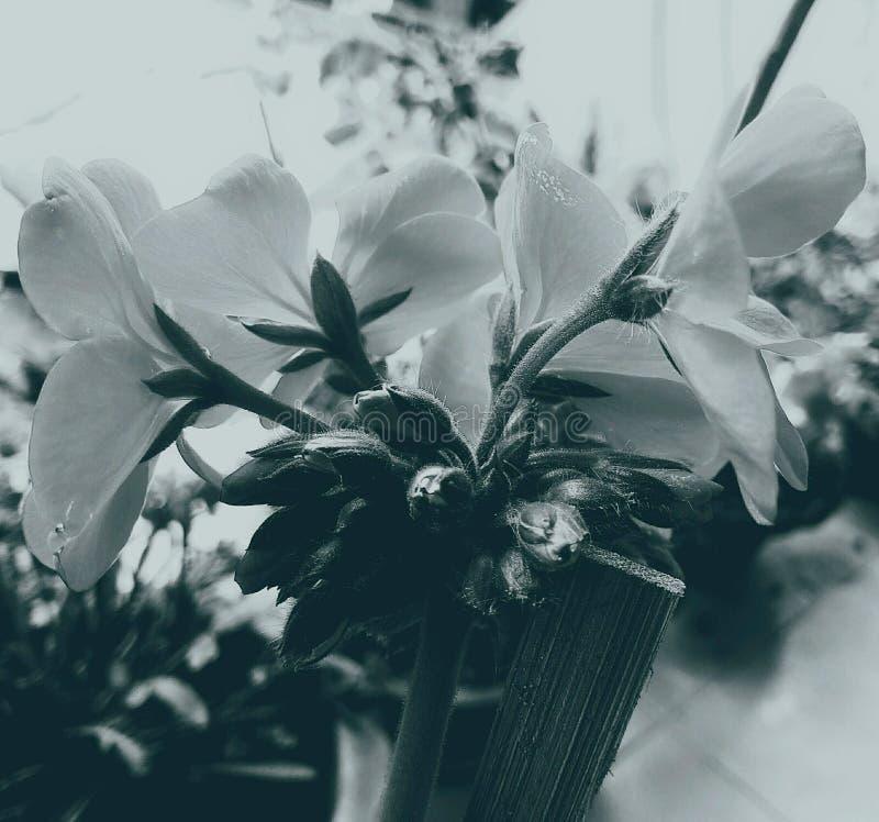 Bloemen die in een fijne kunststijl zijn ontsproten in een studio stock afbeeldingen