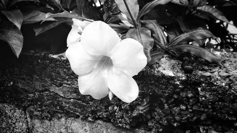Bloemen die in een fijne kunststijl zijn ontsproten in een studio stock fotografie