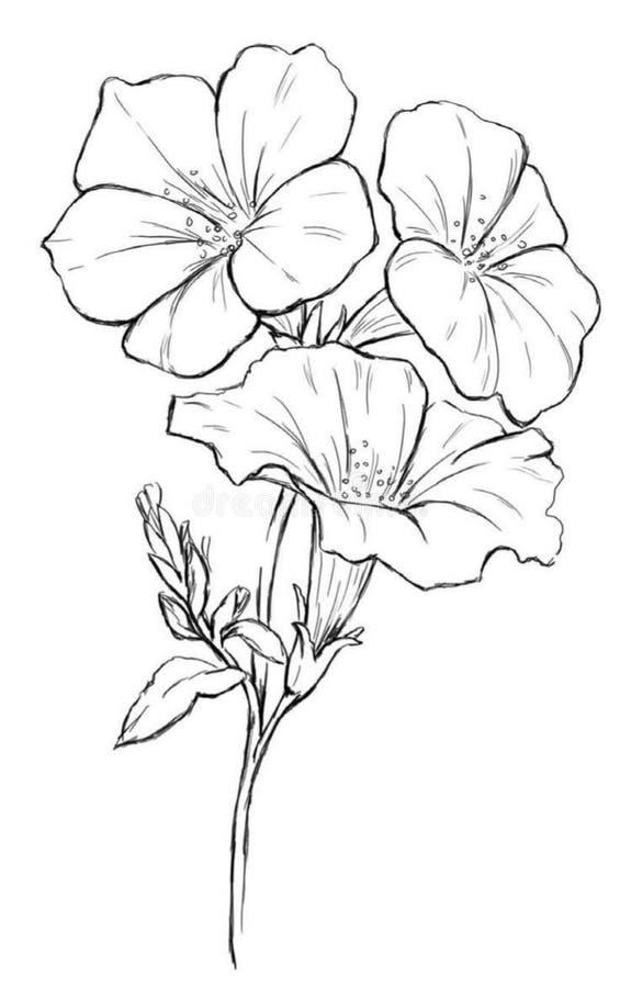 Bloemen die met lijn-kunst op witte achtergronden trekken royalty-vrije illustratie