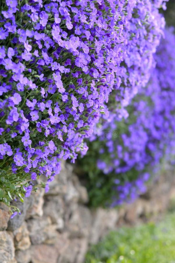Bloemen die op een muur bloeien royalty-vrije stock foto