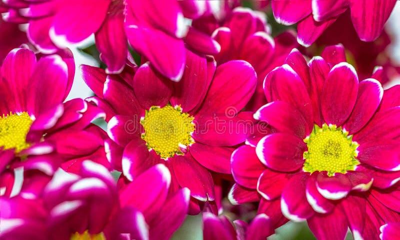 Bloemen die op water drijven stock fotografie