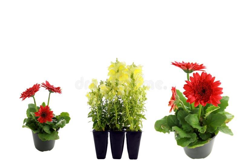Bloemen die op wit worden geïsoleerdw stock afbeeldingen