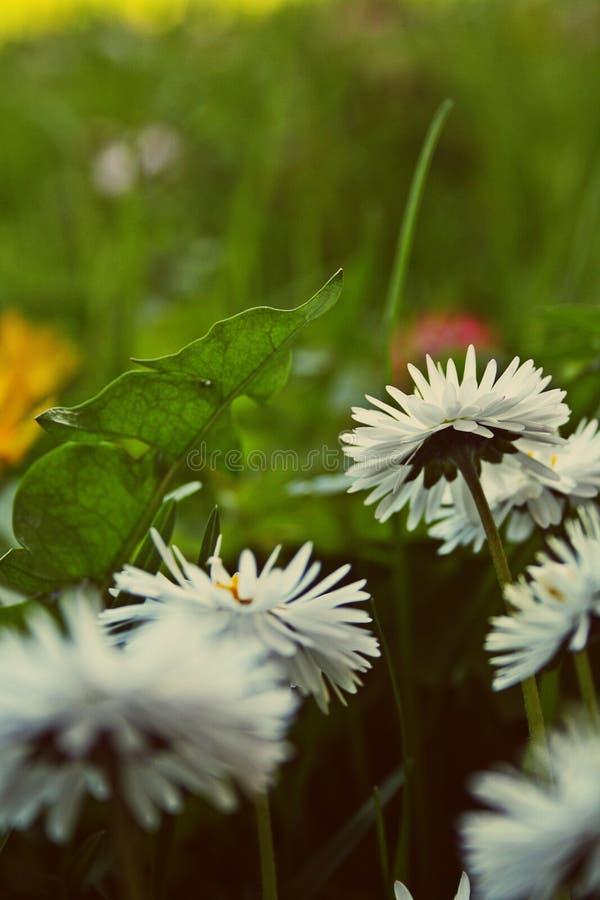 Bloemen die samen zijn stock afbeeldingen
