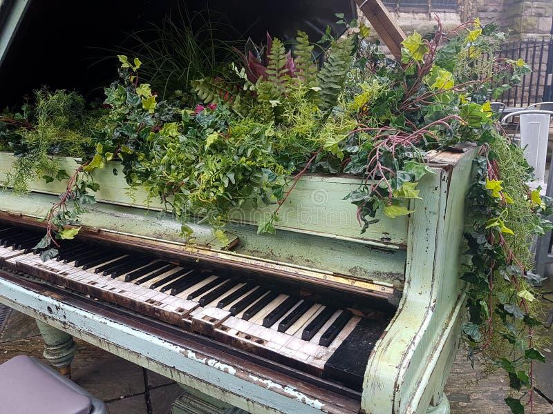Bloemen die uit een baby grote piano voortkomen stock foto's