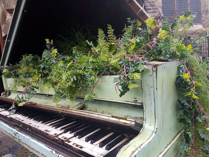 Bloemen die uit een baby grote piano voortkomen royalty-vrije stock foto's