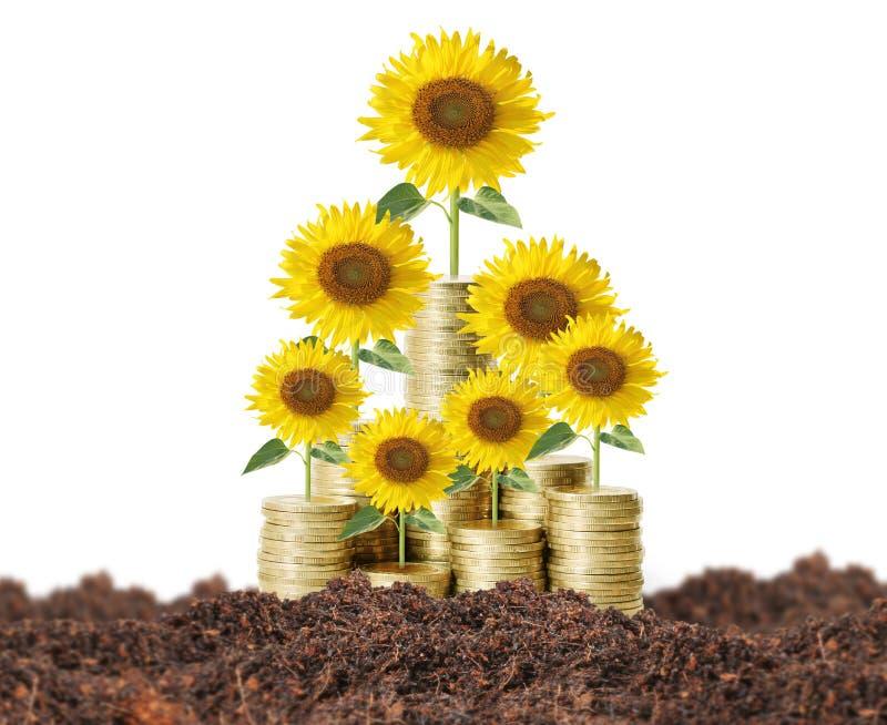 Bloemen die van geld groeien royalty-vrije stock foto's