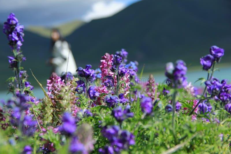 Bloemen door de rivier royalty-vrije stock afbeeldingen
