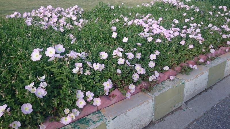 Bloemen door de Wegkant stock fotografie