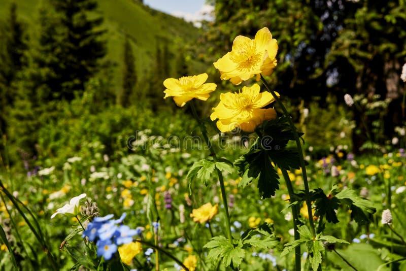 Bloemen door de zon in het gras van een wild gebied bij zonsopgang worden aangestoken die Wilde bloemen met bladeren op een achte stock foto