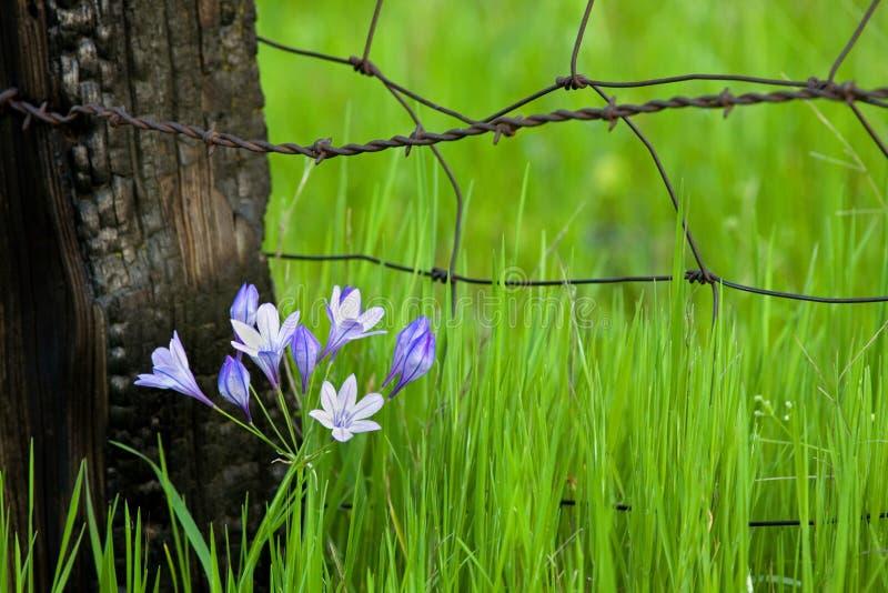 Bloemen door Fencepost royalty-vrije stock afbeelding