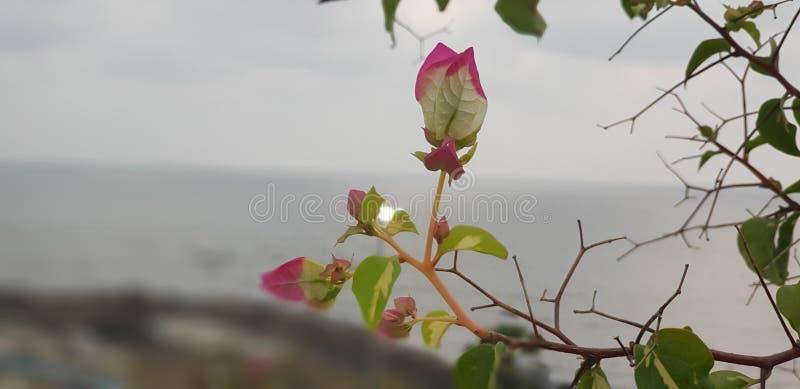 Bloemen door het strand royalty-vrije stock afbeeldingen