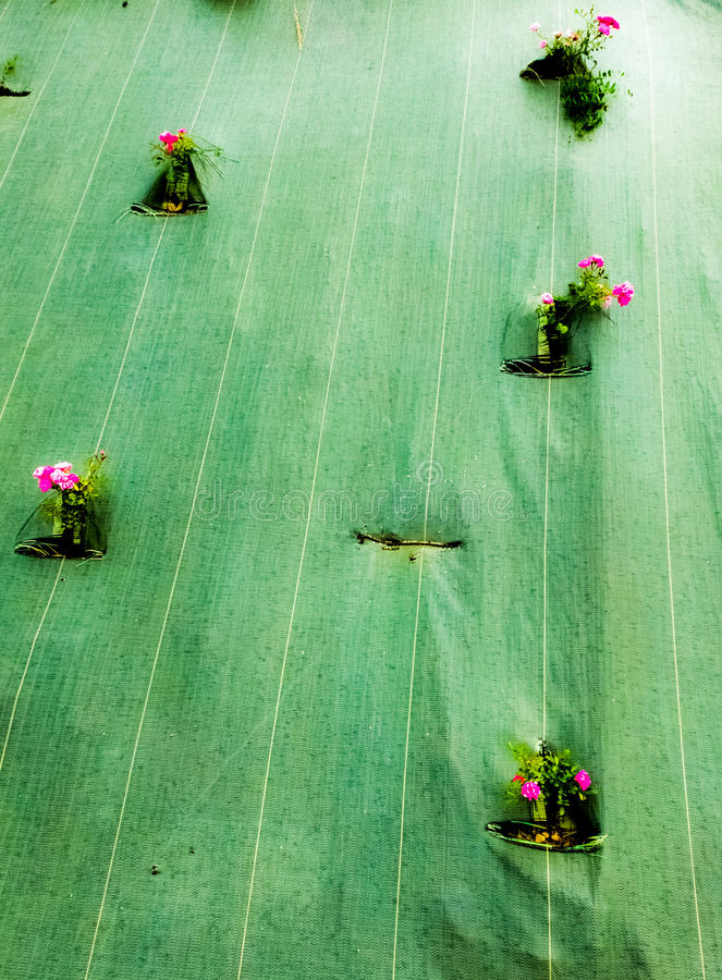 bloemen in een tarp worden opgesloten die royalty-vrije stock foto