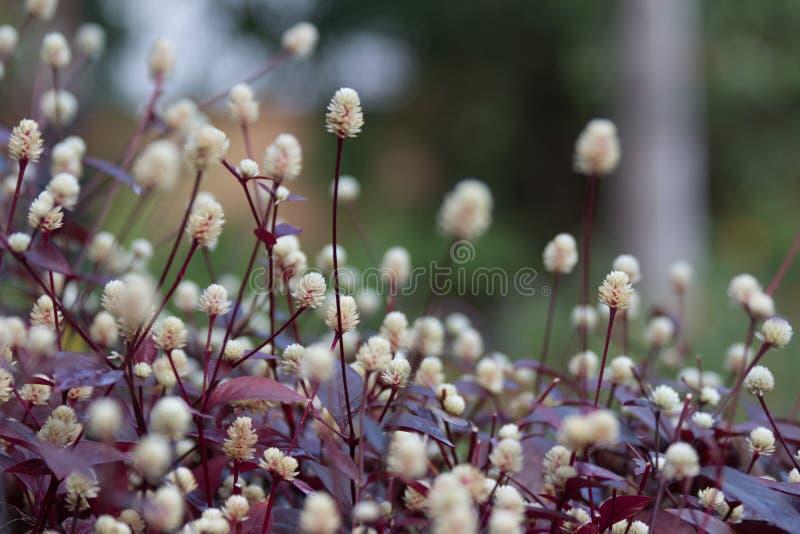 Bloemen in een tropische werf stock foto's