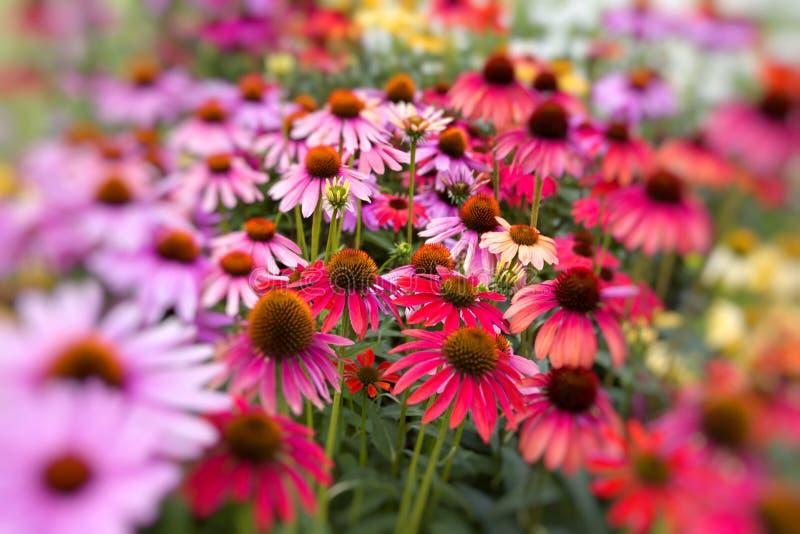 Bloemen in een tuin royalty-vrije stock afbeeldingen