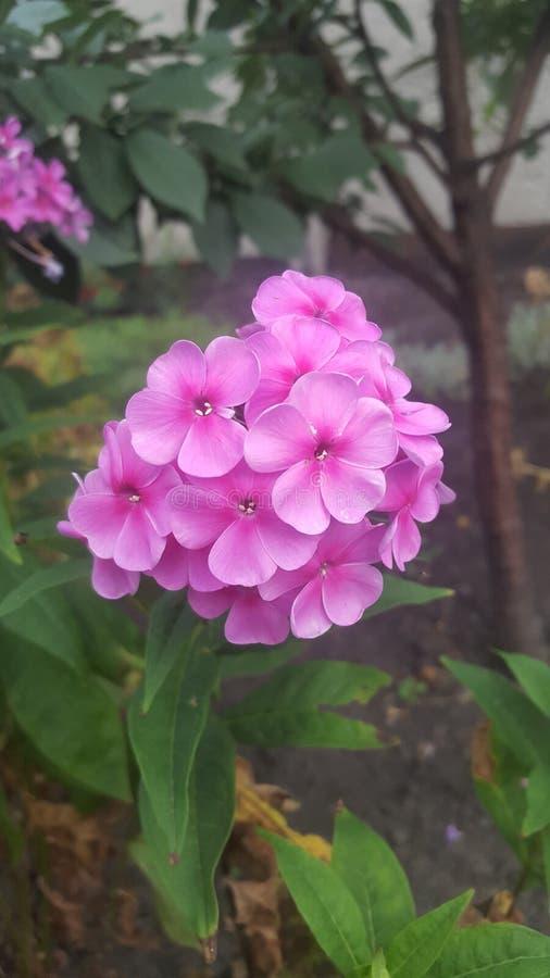 Bloemen in een tuinhuis royalty-vrije stock afbeeldingen