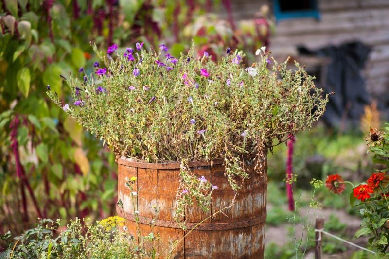 Bloemen in een Vat stock foto's