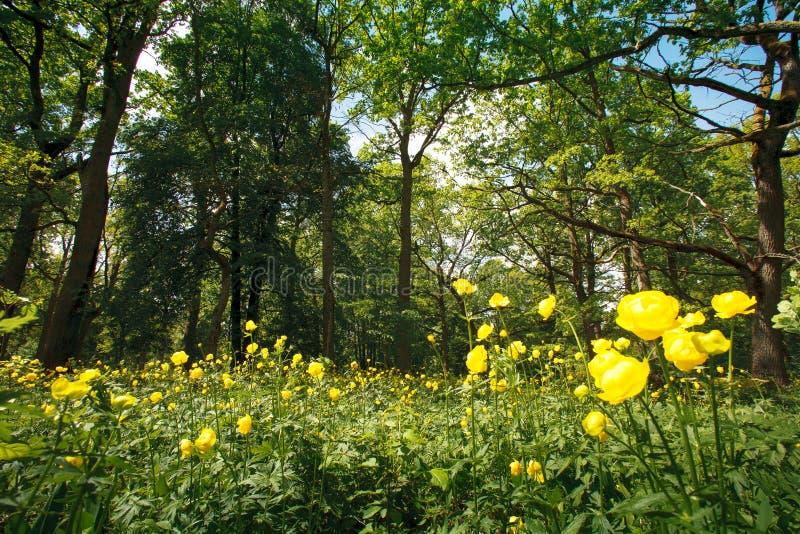Bloemen in een zonnig bos royalty-vrije stock fotografie