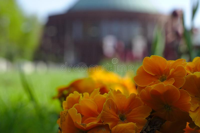 Bloemen en architectuur stock foto