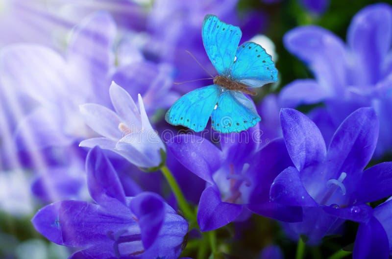Bloemen en batterfly royalty-vrije stock afbeeldingen