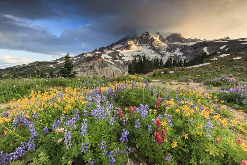 Bloemen en berg stock foto's