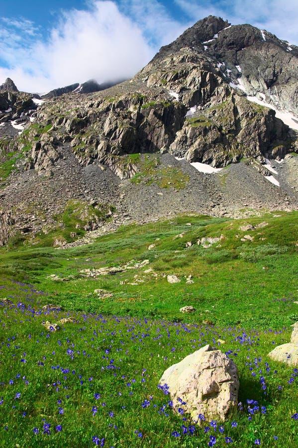 Bloemen en bergen. stock afbeeldingen