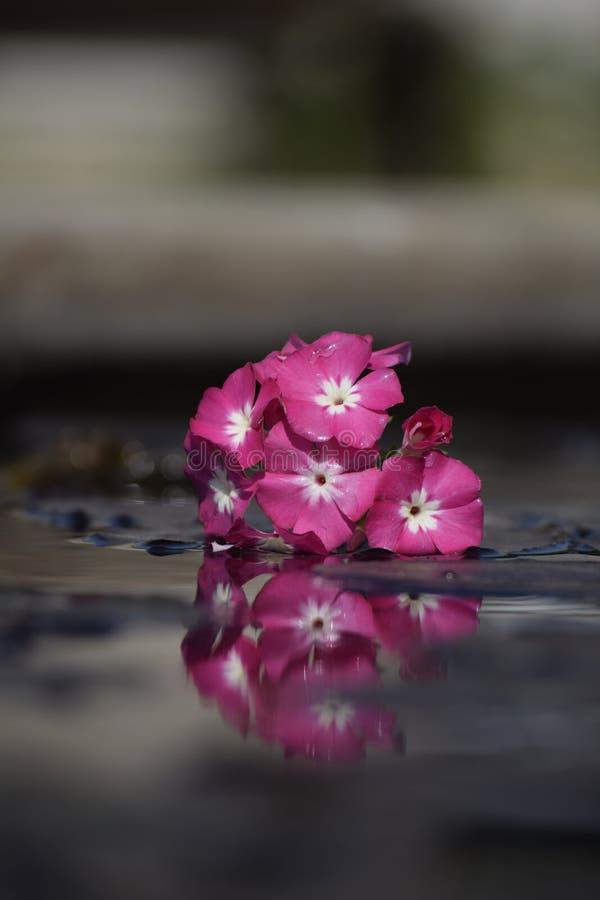 Bloemen en bezinning stock foto