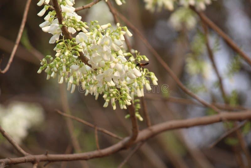 Bloemen en bij stock afbeeldingen